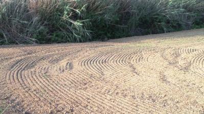 牧草畑の仕上2