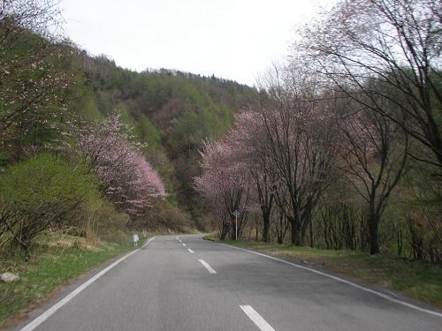 2009.ヴィーナス (63)