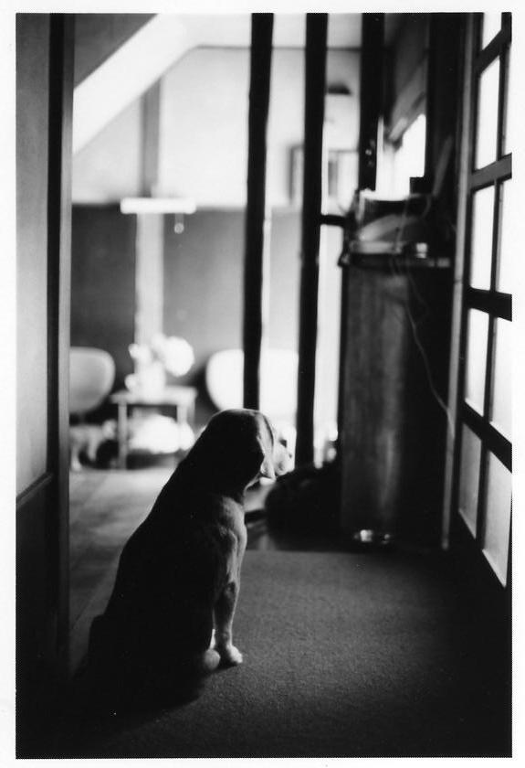 beagle661.jpg