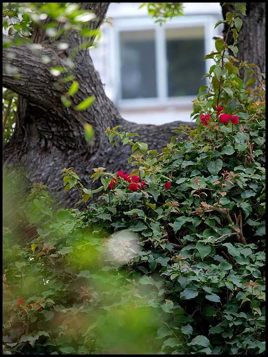 backyard15.jpg