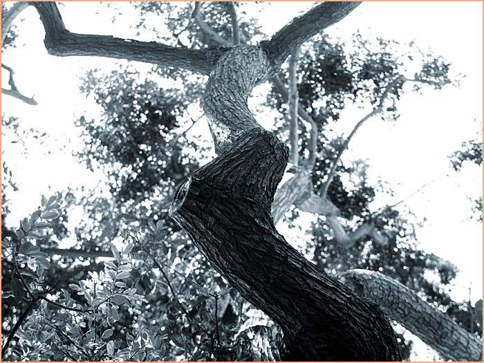 tree26.jpg