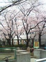 image桜