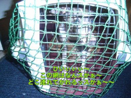 20080817_06.jpg