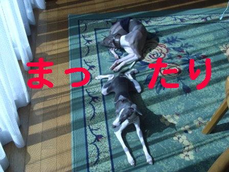 20080818_01.jpg