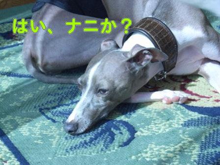 20080818_01_2.jpg