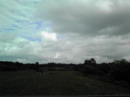 20080819_10.jpg