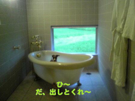 20080819_15r.jpg