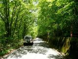 森林ドライブ1