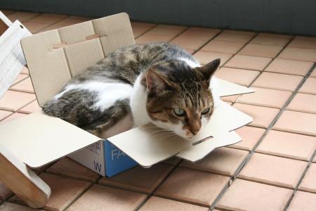 箱にみっちりキウイ