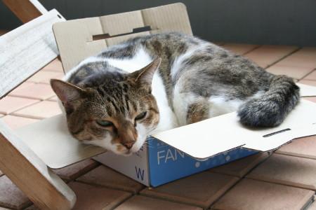 箱に乗るキウイ
