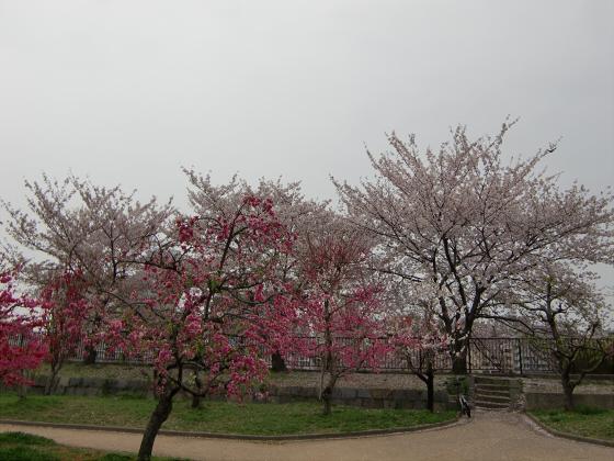 大阪城桃園2011-03