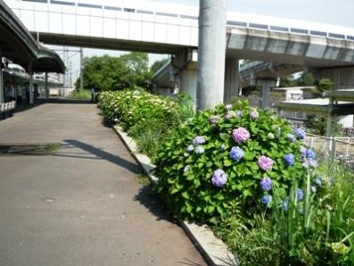 090602_08相模原駅ホーム2