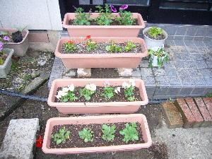 2007年 春 花