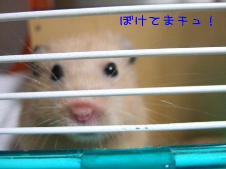 ぼけてまチュ!