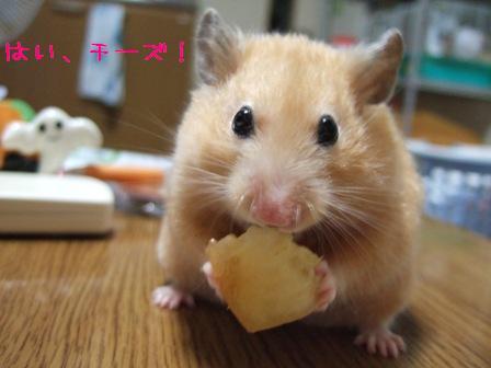 はい、チーズ!