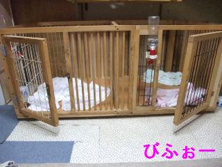 BLOG2009_0520kogi40012.jpg