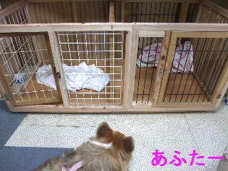 BLOG2009_0525kogi40001.jpg