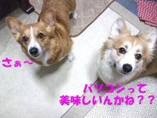 BLOG2009_0604kogi40010.jpg