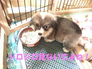 BLOG2009_0613kogi40036.jpg
