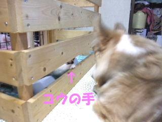 BLOG2009_0613kogi40038.jpg