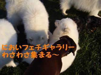 11 1 dogstock
