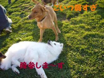 2008 11 1 dogstock4