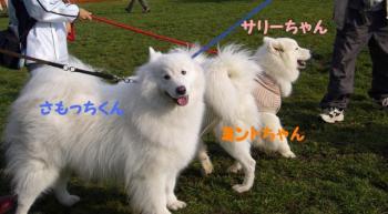 2008 11 2 dogstok1