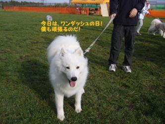 2008 11 2 dogstok2