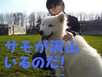 2008 11 2 dogstok3