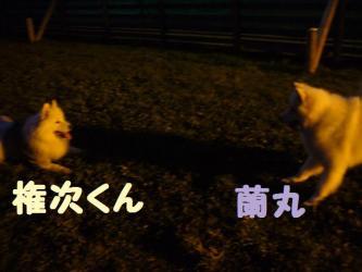 2008 11 2 dogstok5