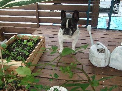 2008_0728野菜0003