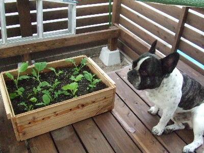 2008_0728野菜0001