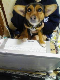 パソコン犬