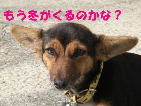 CIMG0084_sh01.jpg