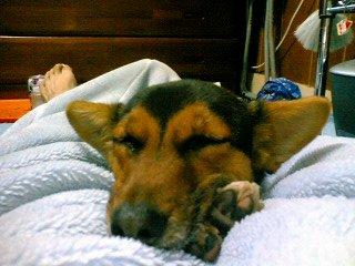 毛布で寝るみぃちゃん