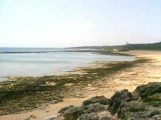 大度浜海岸