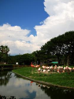 海の中道海浜公園フラミンゴ
