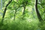 050624forest-thumb.jpg