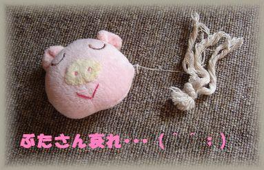 小麦 052(ブタ)