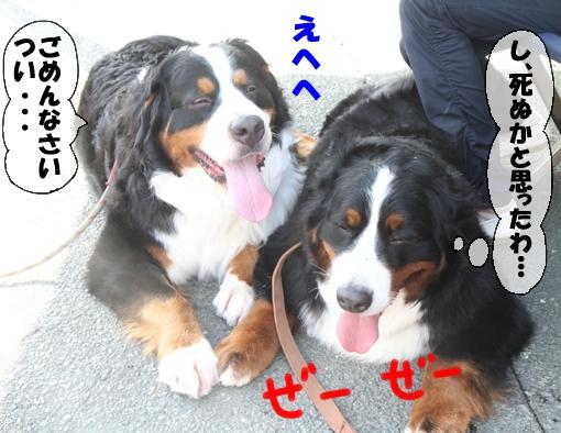 20110514-114.jpg