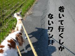 散歩ついていく