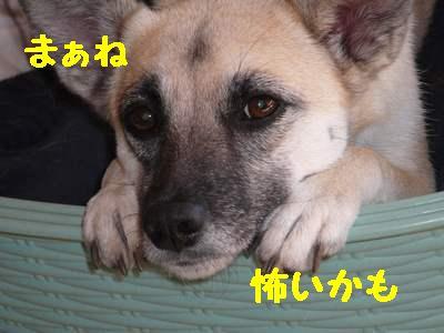 画像09010405.jpf