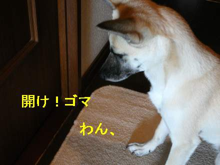 画像90104 0151