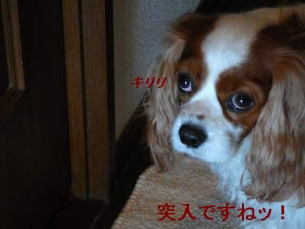 画像90104 0111