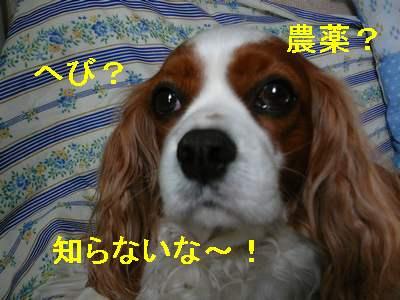 画像090119 0011