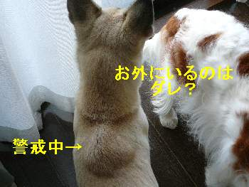 画像0903227 002