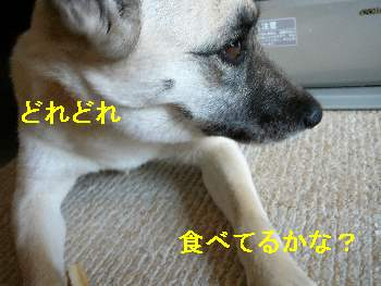 画像0903231 008
