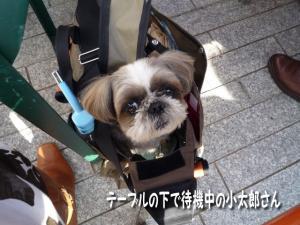 小太郎はバッグの中でおとなしく♪
