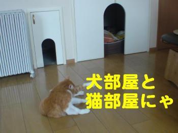 犬部屋・猫部屋