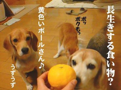 柚子ですよ